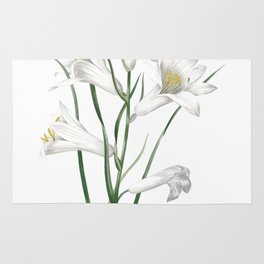 HIGHEST QUALITY botanical poster of Daylily Rug