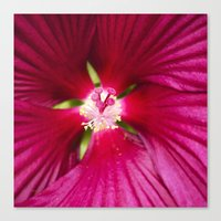 hibiscus Canvas Prints featuring Hibiscus by Christina Rollo