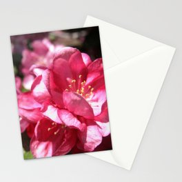 Malus Flower Stationery Cards