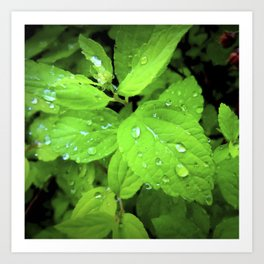 Raindrop on a Leaf Art Print