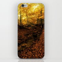 denmark iPhone & iPod Skins featuring Forest Haslev, Denmark - Autumn by by Henrik Wulff Petersen (zoomphoto)