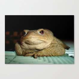 A Common Toad With Philosophical Disposition Canvas Print
