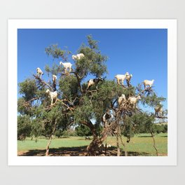 Goats in a tree Art Print