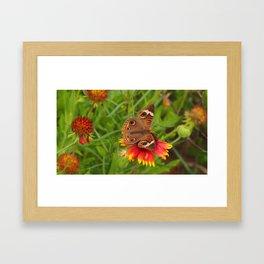 Beach Butterfly Framed Art Print