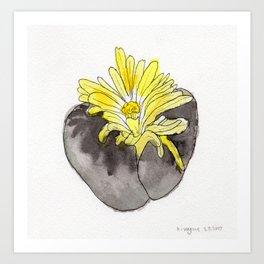 Lithops Blooming Art Print