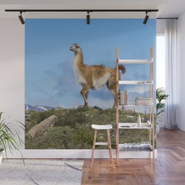 A Guanaco, in Patagonia, Chile. Wall Mural