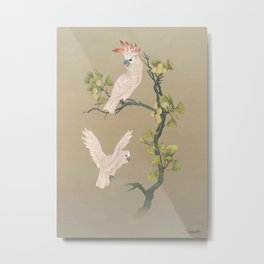 Moluccan Cockatoos Metal Print