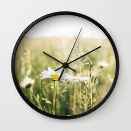 Oxeye Daisy among wild grasses. Norfolk, UK. Wall Clock