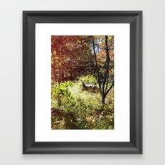 autumn deer. Framed Art Print