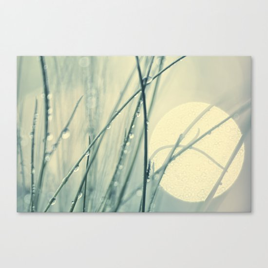 morning blues Canvas Print