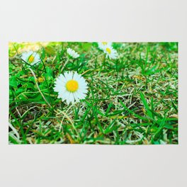Daisies in Clinch Park - Traverse City, Michigan Rug