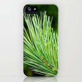 White pine branch iPhone Case