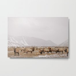 National Elk Refuge Metal Print
