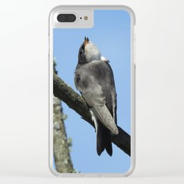 Juvenile Tree Swallow Clear iPhone Case