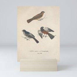 Vintage Illustration - Avium Novae (1825) - Chestnut-bellied Seed Finch & Wing-barred Seedeater Mini Art Print