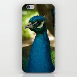Peacock Pride iPhone Skin