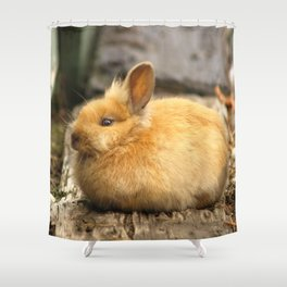 Brown Eyed Bunny Beauty ... Shower Curtain