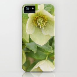 Lovely Lime iPhone Case