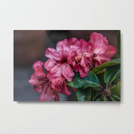 A Whole Bunch of Pink Metal Print