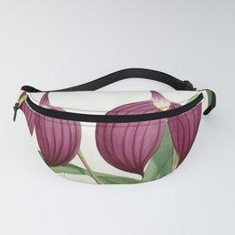 Masdevallia Harryana Coerulescens Vintage Lindenia Orchid Fanny Pack