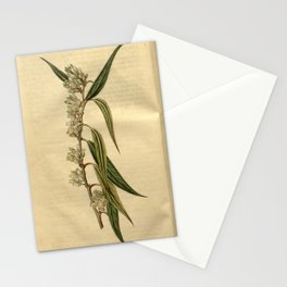 Flower 2357 andromeda axillaris Fine notched leaved Andromeda10 Stationery Cards