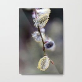 Bursting Buds Bowing in the Back Garden Metal Print