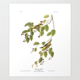 Carbonated Warbler by John Audubon Art Print