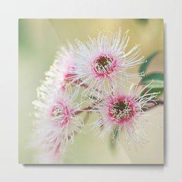 Corymbia Fairy Floss #3 Metal Print