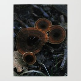 orange mushrooms Poster