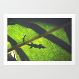 Green Geco Art Print