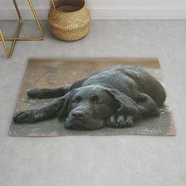 Labrador dog in the rain ! Rug