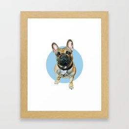 French Bulldog blue spot. Framed Art Print