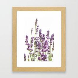 Purple Lavender #3 #decor #art #society6 Framed Art Print