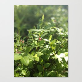 Underbrush wonders in the forest Canvas Print