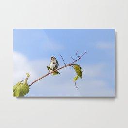 Swinging on a Vine Metal Print