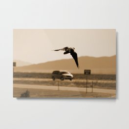 Raven Flying in Sepia Metal Print