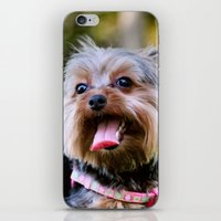 yorkie iPhone & iPod Skins featuring Darling Yorkie by IowaShots