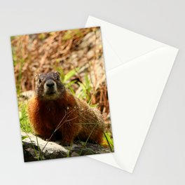 Marmot On A Rock Stationery Cards