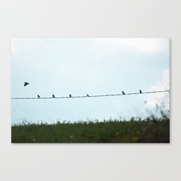 Birds | Uccelli Canvas Print