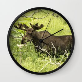 Bull Moose in Kincaid Park Wall Clock