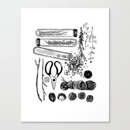 Sprout Canvas Print
