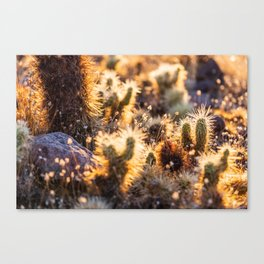 Cacti Medley Canvas Print