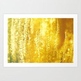 Golden Harmony Calluna Art Print