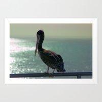 Young Pelican Art Print