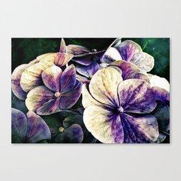 Hortensia flowers in vintage grunge watercoloring style Canvas Print