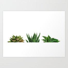 succulents triple Art Print
