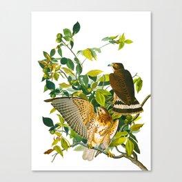 Broad Winged Hawk Canvas Print