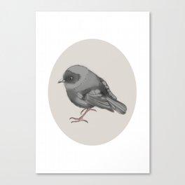 Black robin Canvas Print