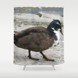 Short Legged Duck at Jensen Nature Reserve Shower Curtain