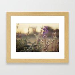 Purples Framed Art Print